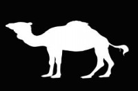 Logo The White Camel