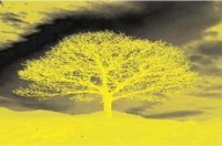 Logo Yellow Tree